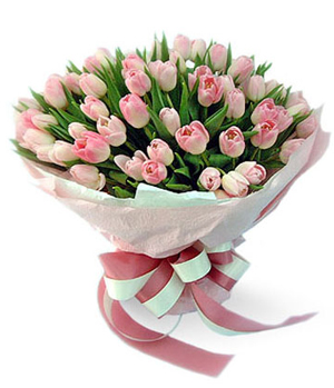 50 Pink Tulips