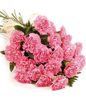 Twelve Pink Carnations(Red or Mixed)