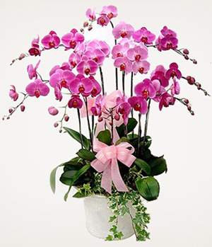 10 moth orchids