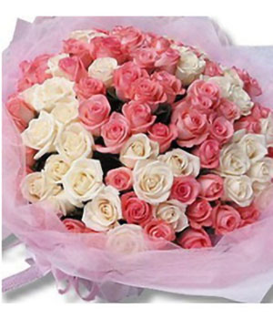 99 pink white roses