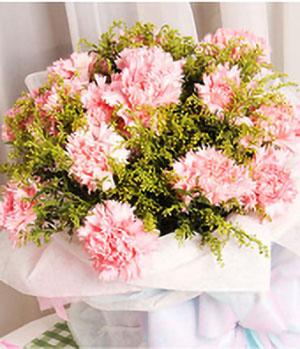 16 Pink Carnation