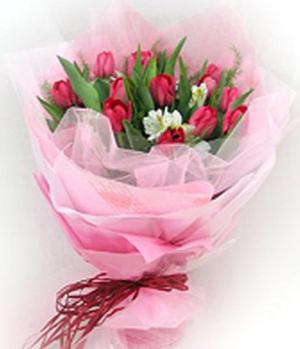16枝粉色郁金香