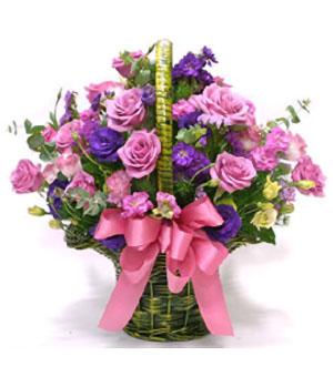 China flower - Purple Lucky
