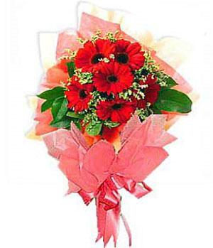 9枝红色非洲菊