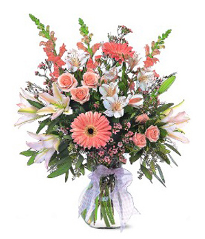 Stars Spark - China online Florist