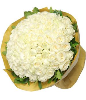 99 white rose