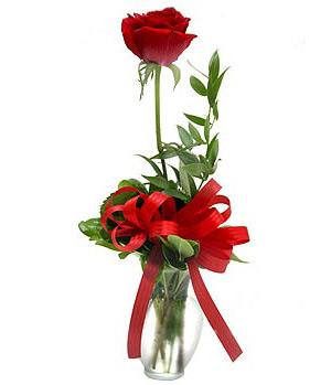 一枝玫瑰花