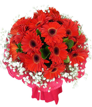 gerbera for Thank you, delivering in China