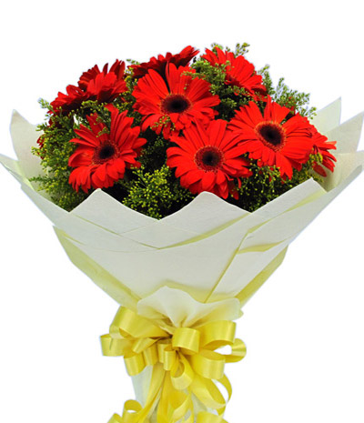 Gerbera Flower Delivery China